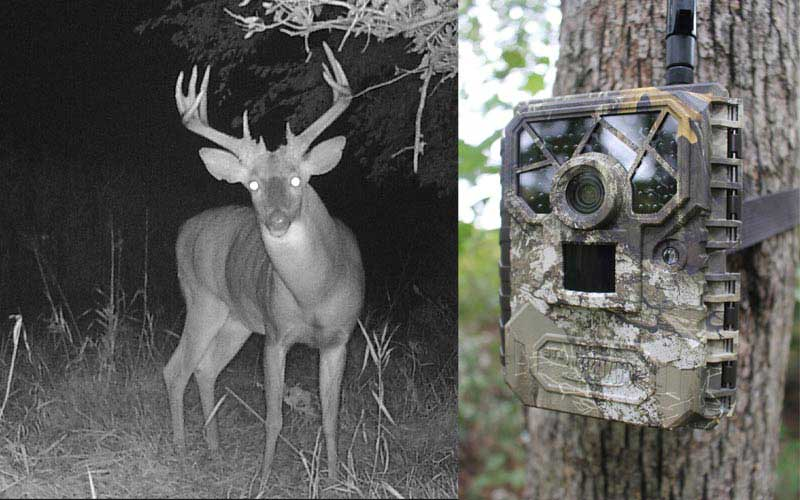 Covert Cellular Wireless Trail Camera review